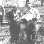 Mr.ing.Zeno Kindij i Luka Marić prilikom nasadjivanja matica na mriješćenje 1963.godine. Saničani - Prijedor