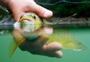 Zbog zatopljenja ugrožene stotine vrsta riba o kojima ovisi čovječanstvo