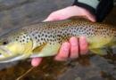 Od danas zabrana ribolova na nekoliko salmonidnih vrsta riba