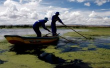 People clean the polluted bay of Lake Titicaca in Pajchiri, Bolivia, Wednesday, Nov. 19, 2008. Thousands of people living on the shores of Lake Titicaca, the highest in the world, are threatened by the lake's polluted waters. (AP Photo/Juan Karita)