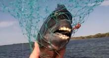 zubata_riba_ovcija_glava