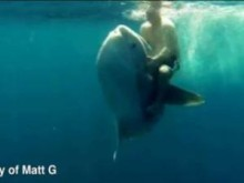 ronilac-jase-mola-ribu