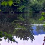 patka-jezero-staraca-ilijas