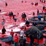 ubijanje-delfina