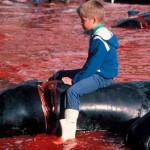 ubijanje-delfina-i-kitova