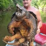 kornjaca-ulov