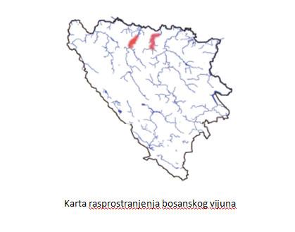 karta-rasprostranjenosti-bosanskog-vijuna