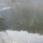 Otvor-sezone-jezero-staraca-28-februar-2015_4616