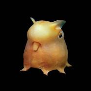 dumbo_octopus