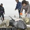 delfini-japan-23422