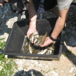 Ulov - Misoča između brana JKP Vodostan
