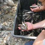 Ulov i još jedna riba sa infekcijom u profesorovim rukama - Bosna, Čifluk