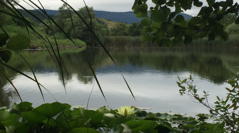 Lokvanj na jezeru Starača u Čifluku