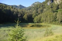Zarasta u travu i algu Crno jezero na Zelengori. Potrebno mu je vratiti stari sjaj (Foto, I. BAJROVIC)